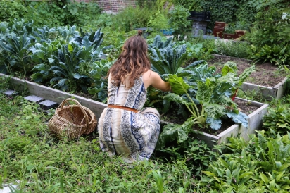 Arielle tending to thriving leafy greens at St. Roses Garden on the Fordham University Rose Hill Campus