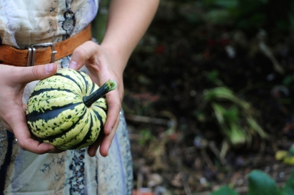 a carnival squash as found growing out of the compost pile