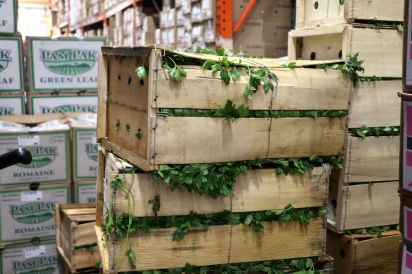 crats of fresh herbs and produce line the walkways of the Citarella warehouse