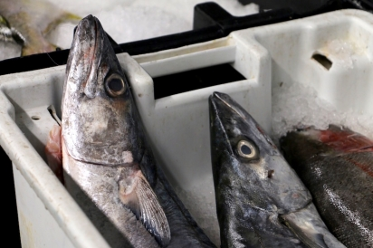 The warehouse contains refrigerated sections, dedicated to the fresh wild-caught fish they are known for.