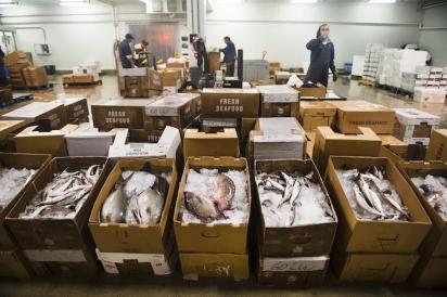 Fresh Fish at FFM in Hunts Point